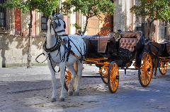 Valentines Carriage Ride Through Downtown San Antonio (Pickup at Emily Morgan Hotel)