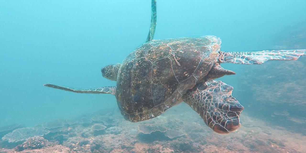 Mudjimba Island Double Dive