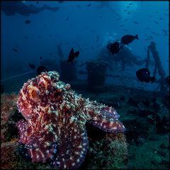 Ex-HMAS Brisbane Double Dive