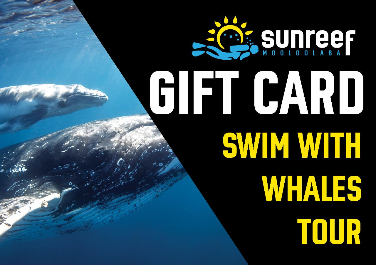 Gift Card Swim with Whales