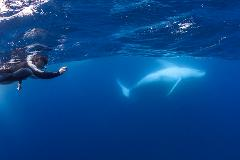 Swim with Whales Tour
