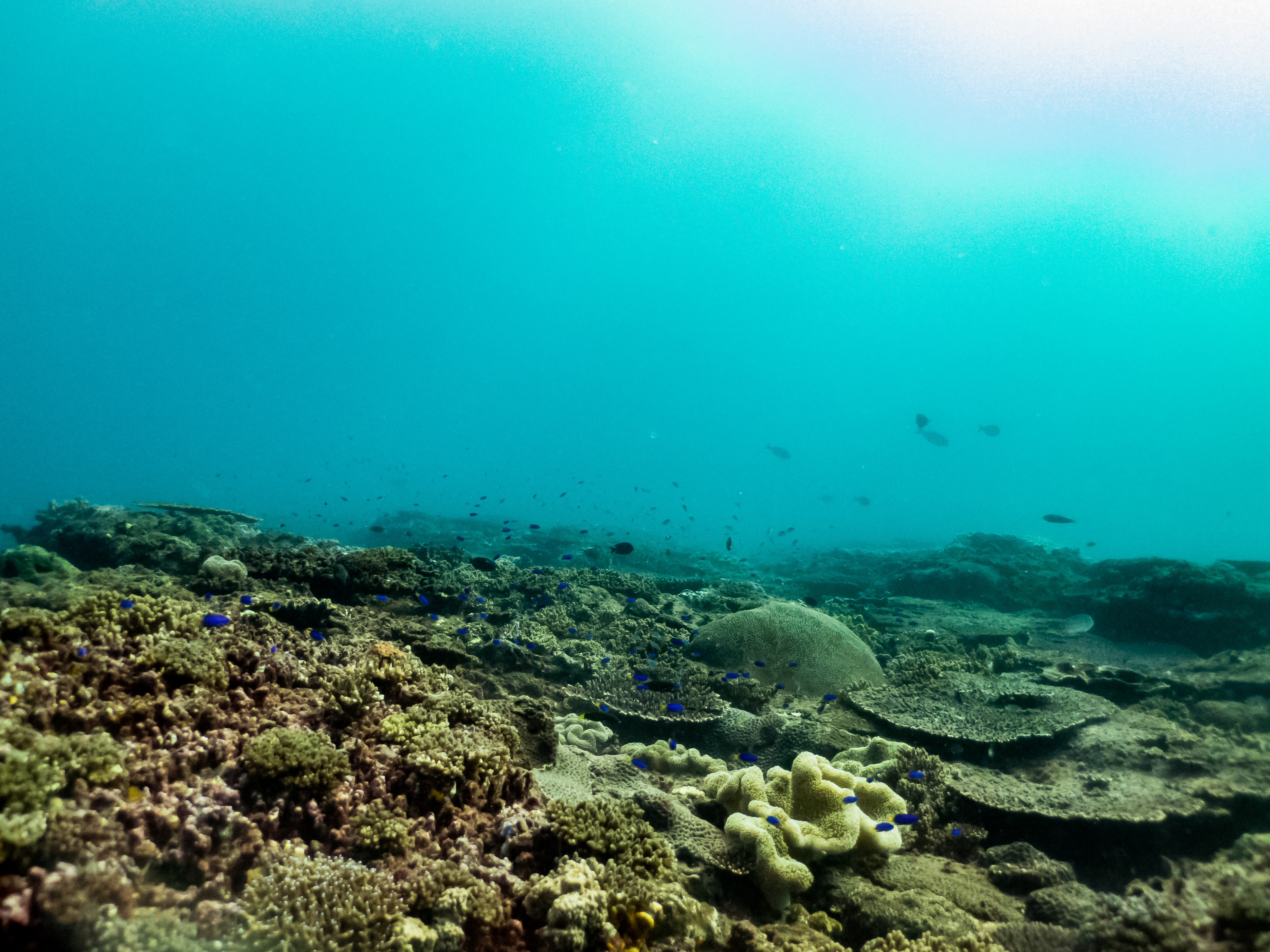 Canon Collective Photography Double Dive on Local Reefs