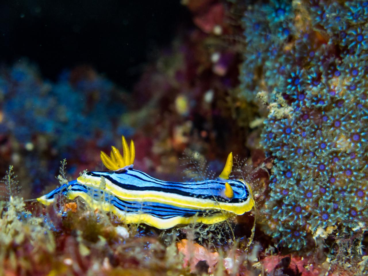 Nudibranch Double Dive