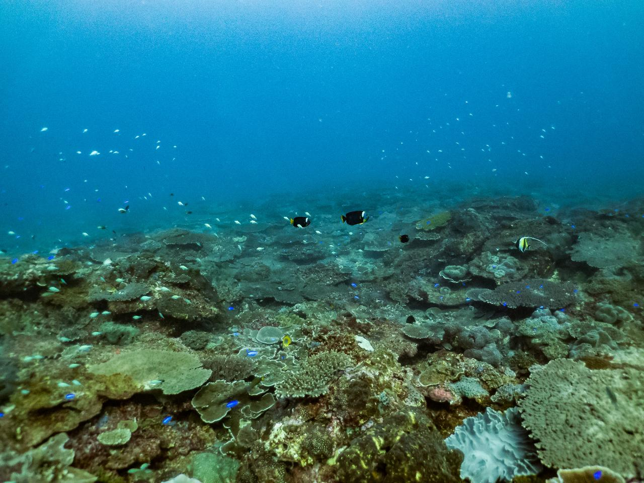 zLocal Reefs Double Dive (Shallow Reef Suitable for Open Water Students 6-18m)