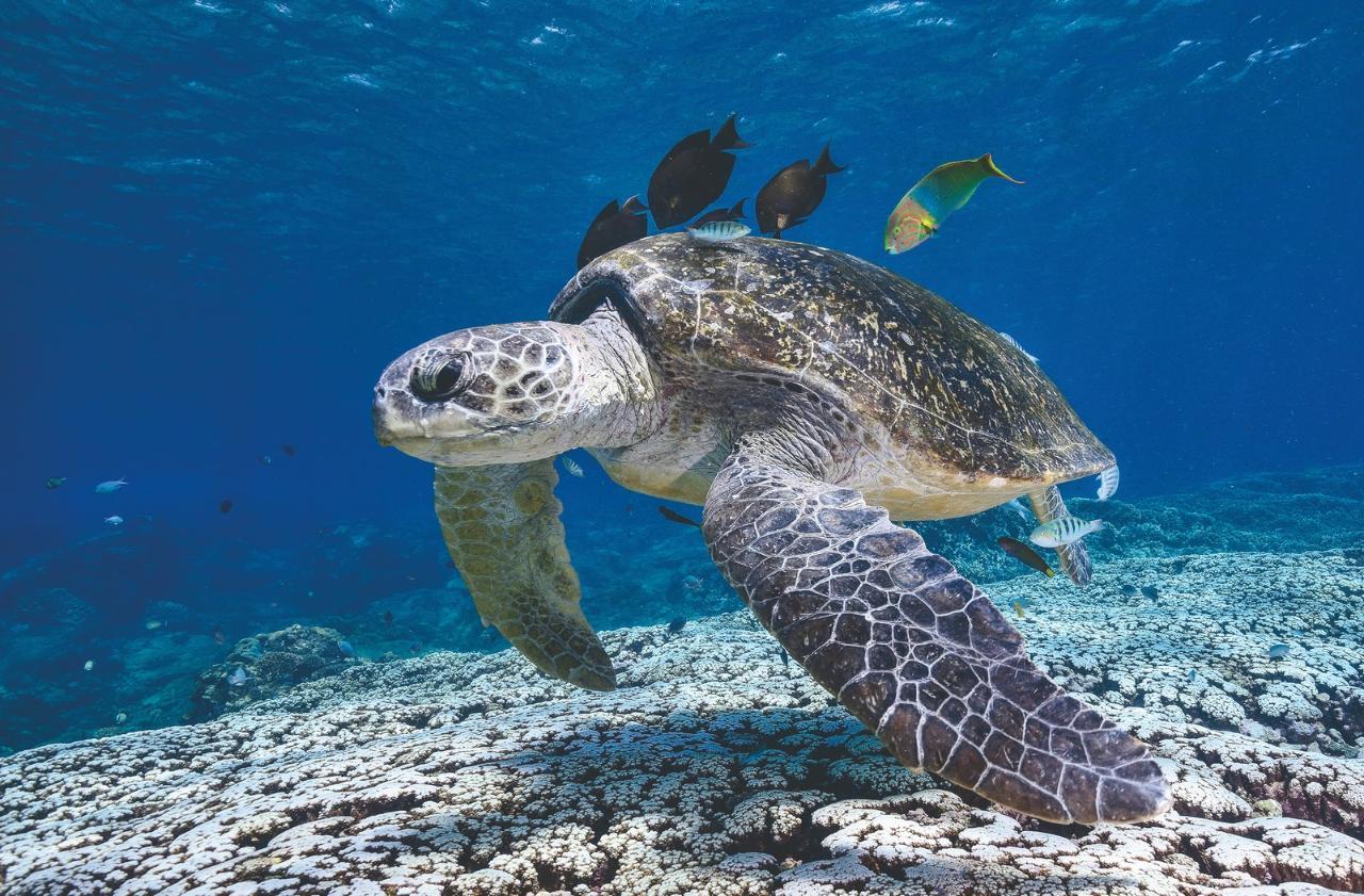 zFlinders Reef Snorkelling Trip