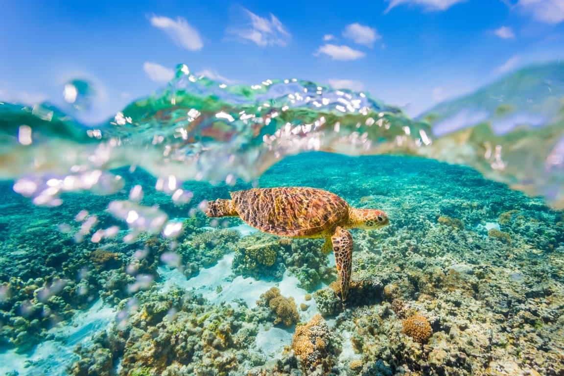 Clean Up Australia Dive and Beach Clean