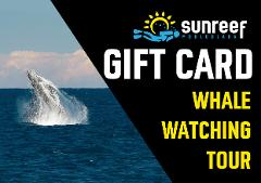 Gift Card Whale Watching