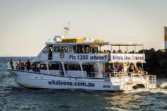 Private Charter on Whale One
