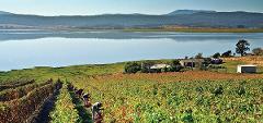 Derwent Valley Wine & Food Experience