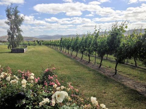 Coal River Valley Wine Tour Tasmania Australia