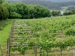 Huon Valley Wine Tour