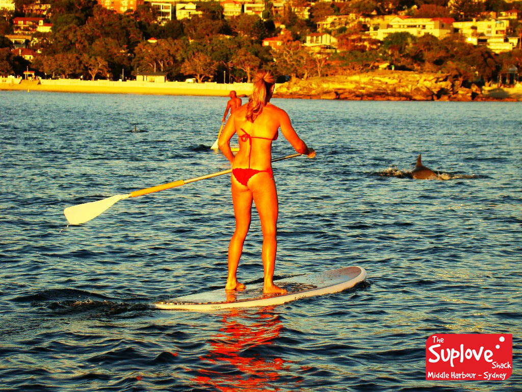 Annual ONE HOUR SINGLE Stand UP Paddle Board (SUP) Rental Pass