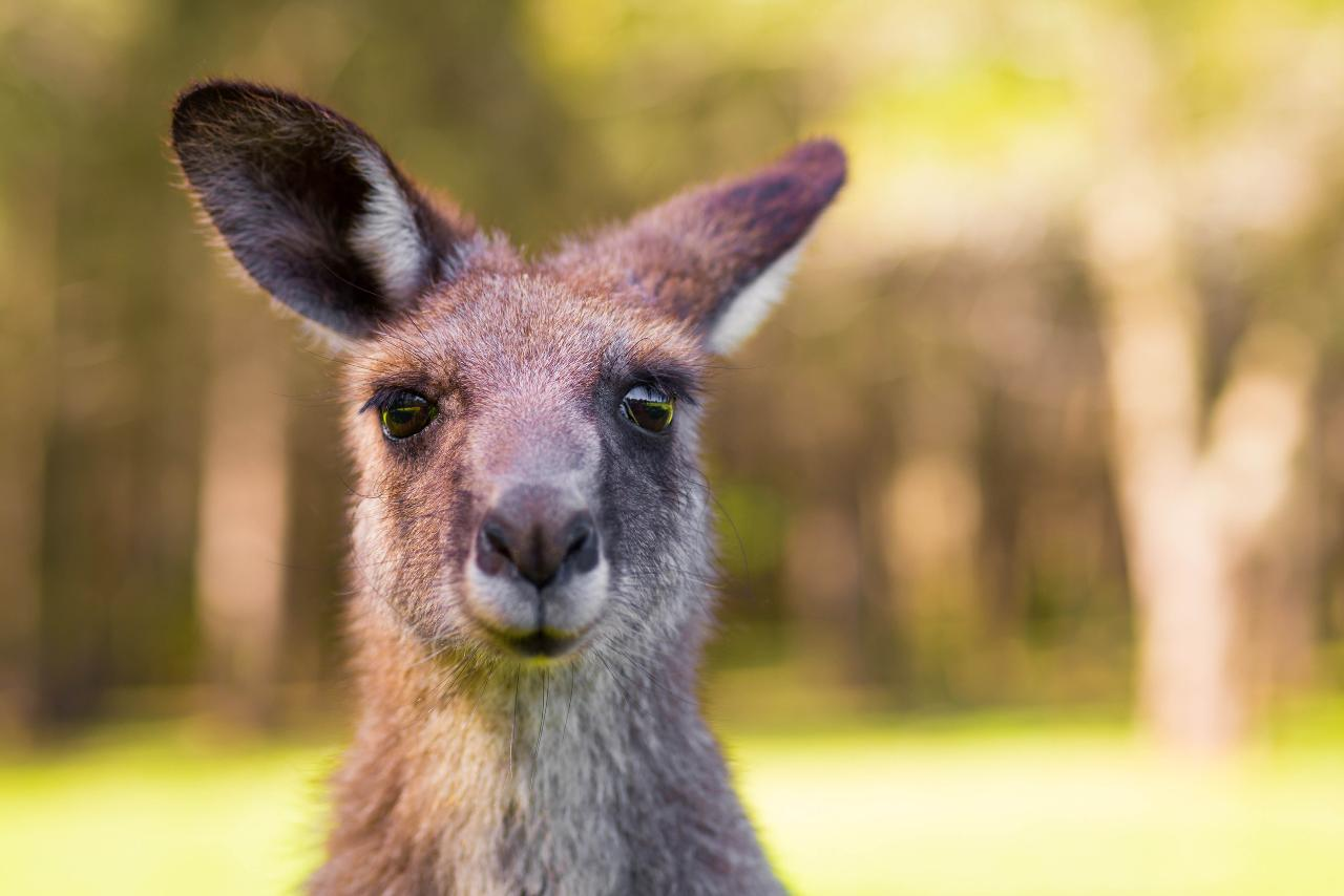 Yarra Valley Wine and Wildlife Self-drive Tour