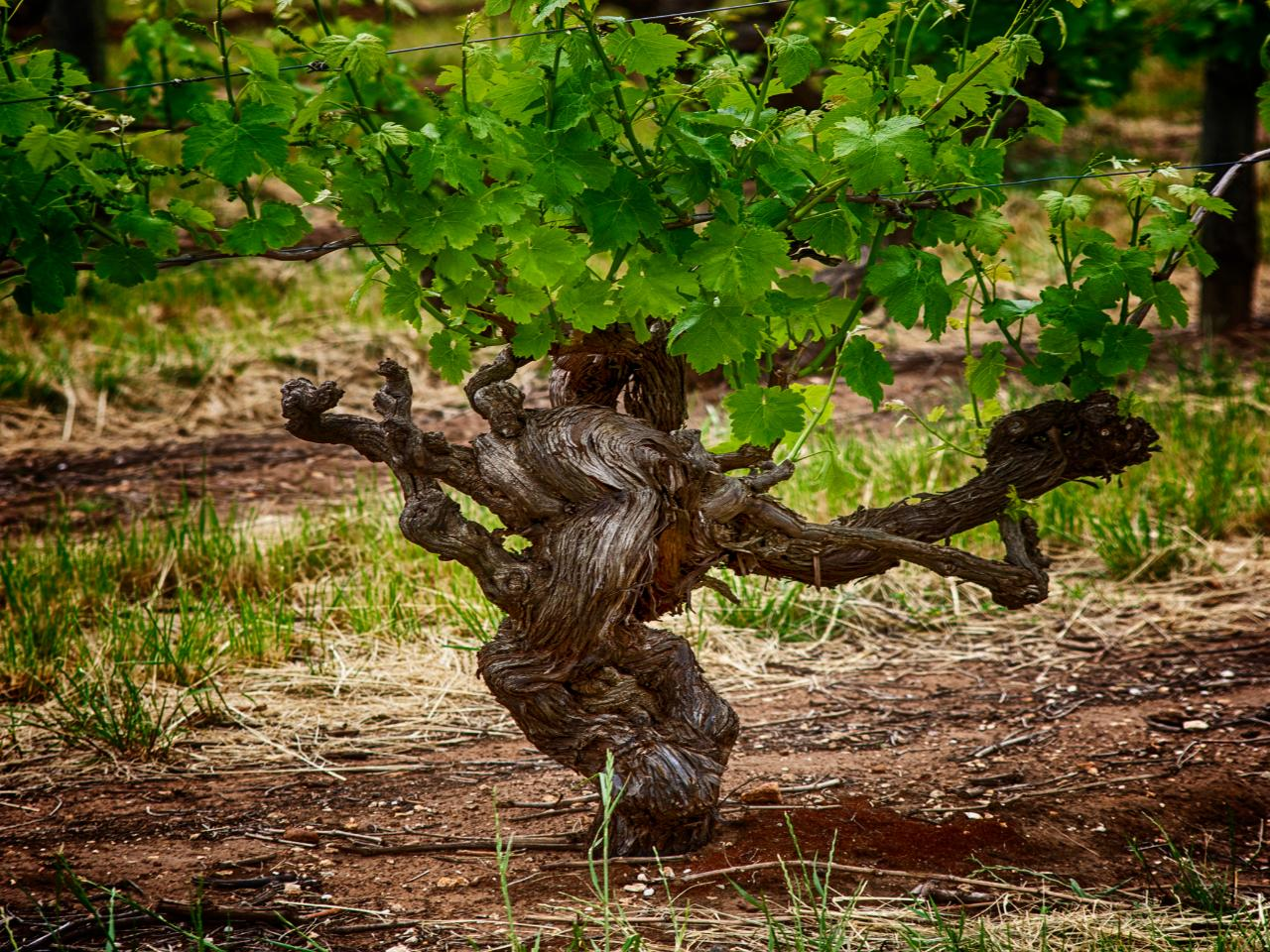 Barossa Valley Voyager - Book Direct & Save