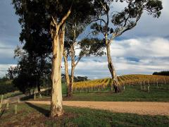 Hahndorf & Adelaide Hills Extravagance