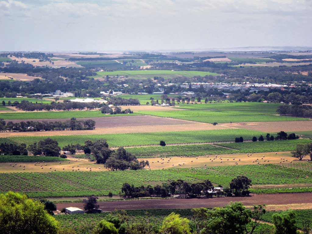 PRIVATE Barossa Valley Tour with Lunch