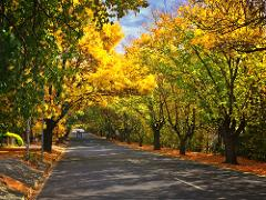 Adelaide Hills & Hahndorf Hideaway - Book Direct & Save