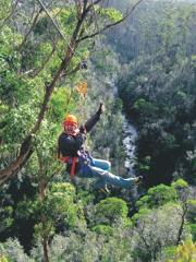 Gift Card - Zipline Tour