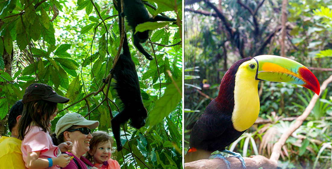 Belize Zoo & Baboon Sanctuary Combo (10 - 13 pax)