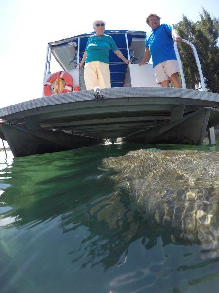 Snorkel with Manatees-Semi Private Tour