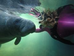 Gift Certificate - Snorkel with Manatees - Private Tour