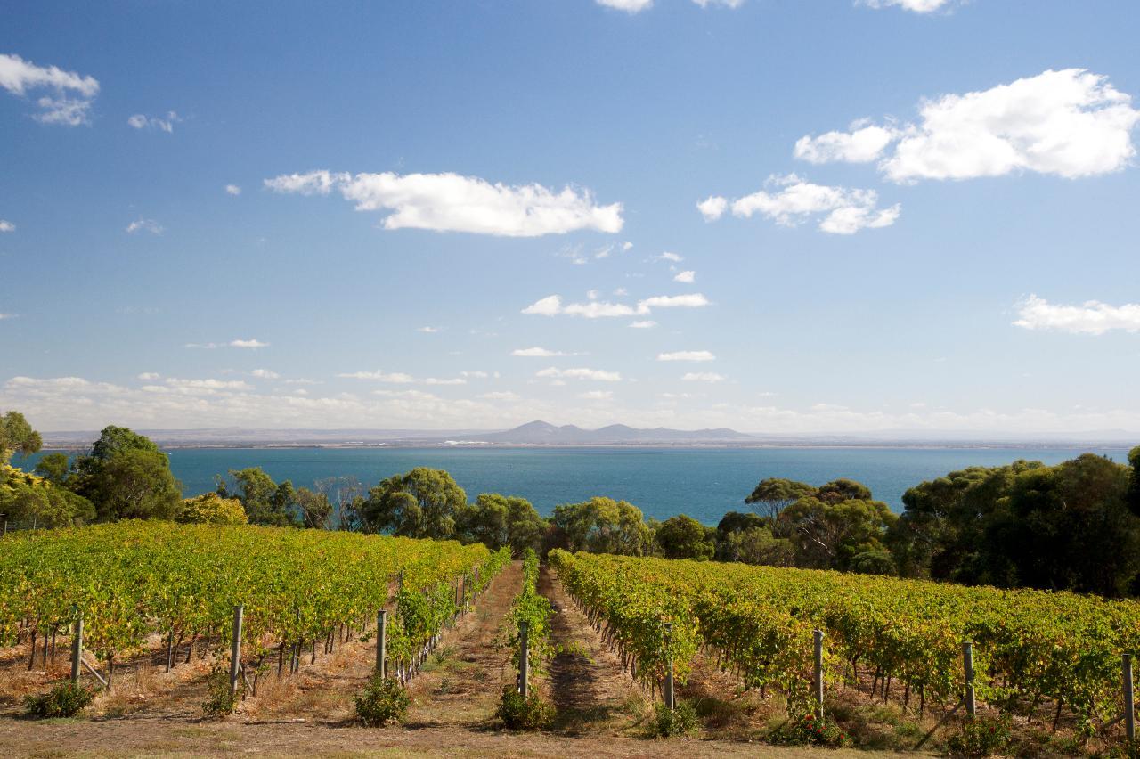 Bellarine Peninsula Wine Day Tour