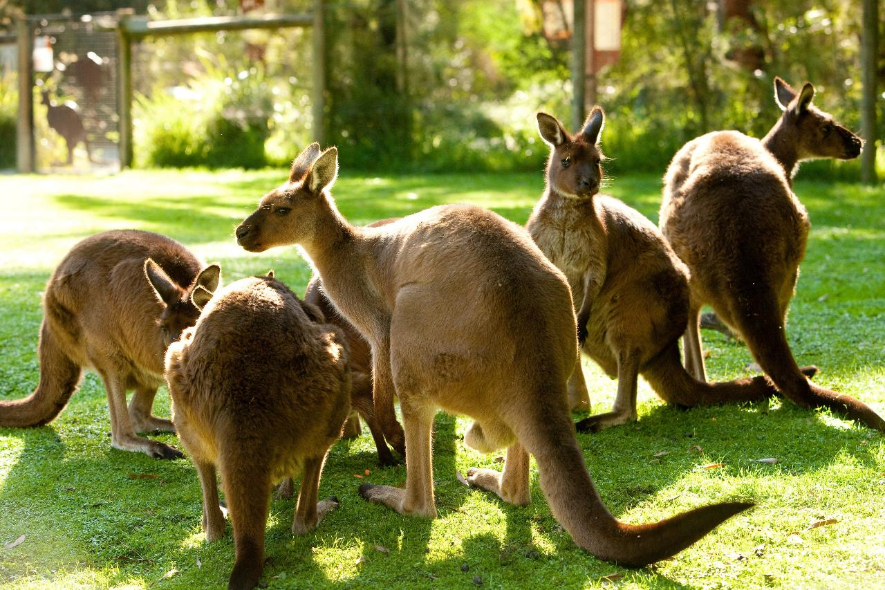 Yarra Valley Wildlife, Wine & Food Day Tour