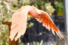 Encounter - Wings 'n' Things