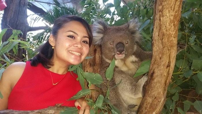 Encounter - Koala Caper