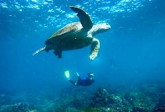 SNORKEL WITH THE TURTLES!