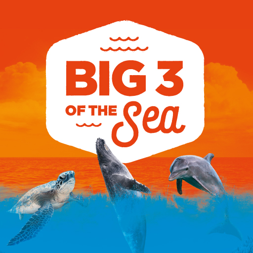THE BIG 3 OF THE SEA!