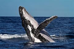 Private Whale Watching Tours