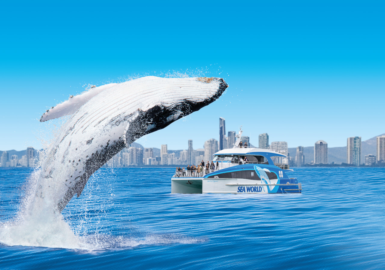 Sea World Whale Watch - 2pm /  3pm