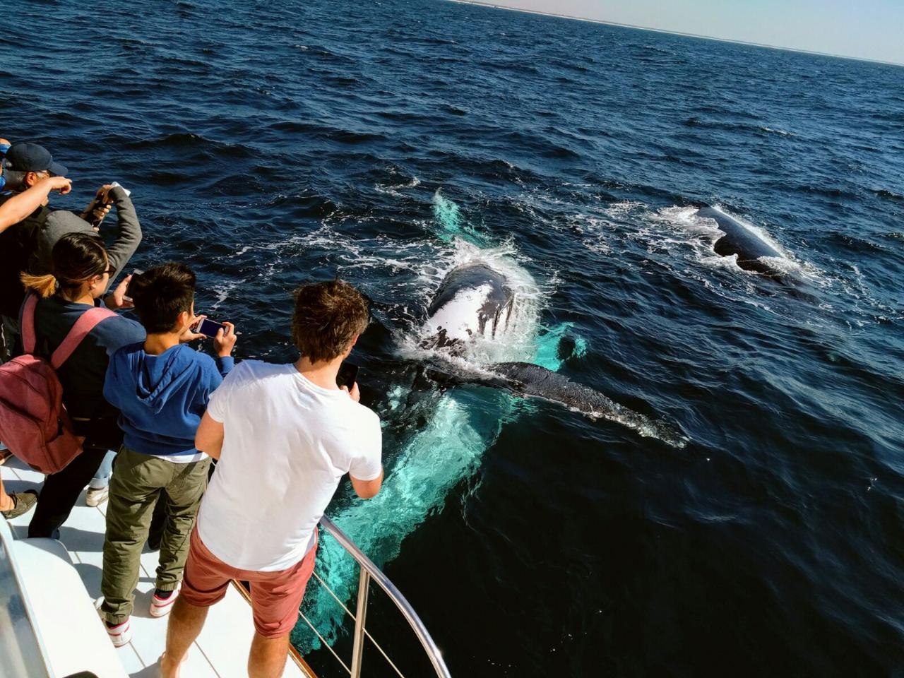 Brisbane Whale Watch