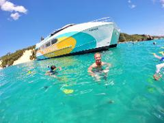 Dolphin & Tangalooma Wrecks Cruise (with Gold Coast Transfers)