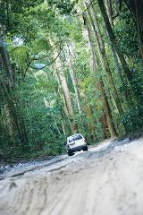 Exclusive Hummer Fraser Island Tour + Whale Watch