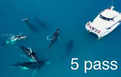 Whale Lover 5 cruise pass - 2020