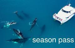 Whale Expert Season pass (20 cruises) - 2020