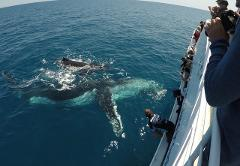 Whale Watch + Sunrover Fraser Island Tour package