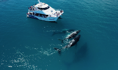 Whalesong Whale Watch Tour
