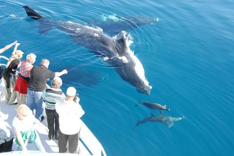 Whale Search and Dolphin Watch