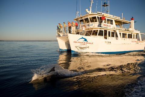 Sydney's Surf 'N' Dolphin Cruise Tour