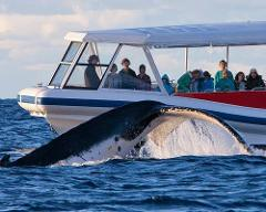 Whale Watching 'N' Wineries Tour