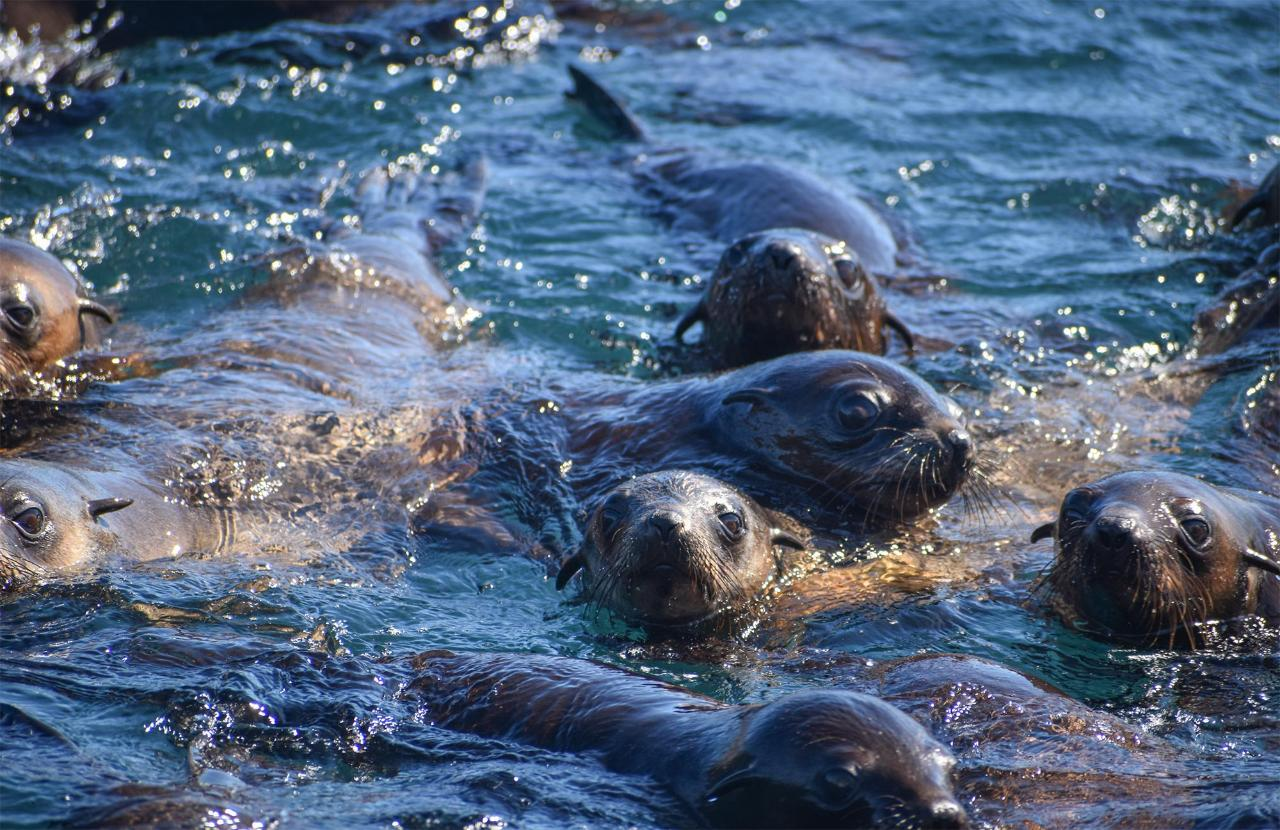 Phillip Island Seal Cruise