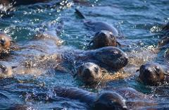 Phillip Island Seal Cruise - Nature Parks