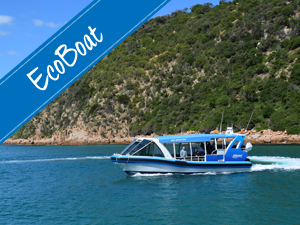 EcoBoat - Cape Explorer Tour