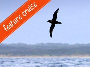 Shearwater Twilight Cruise