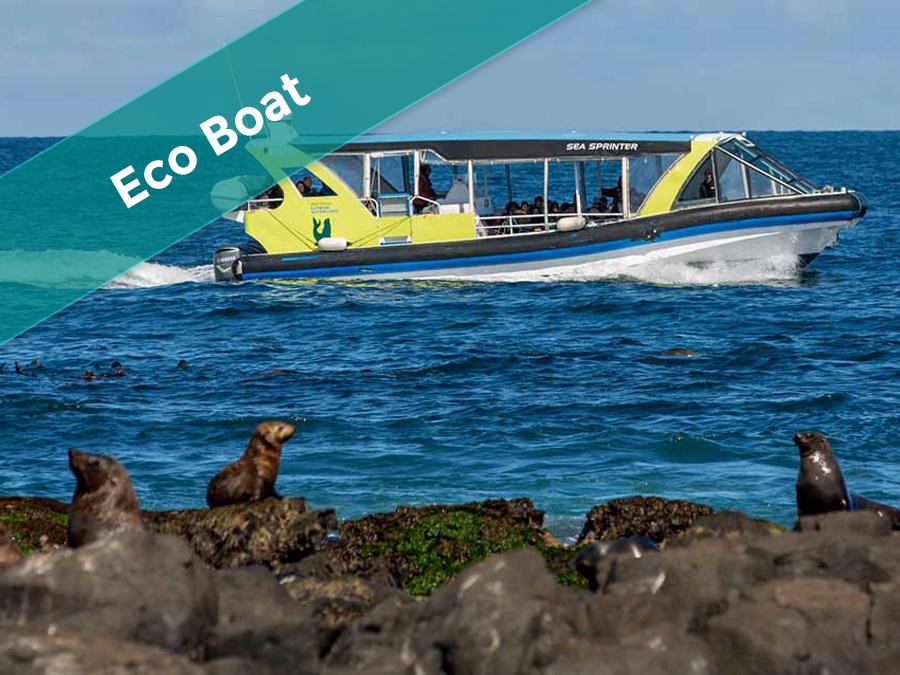 EcoBoat - Seals Adventure Tour