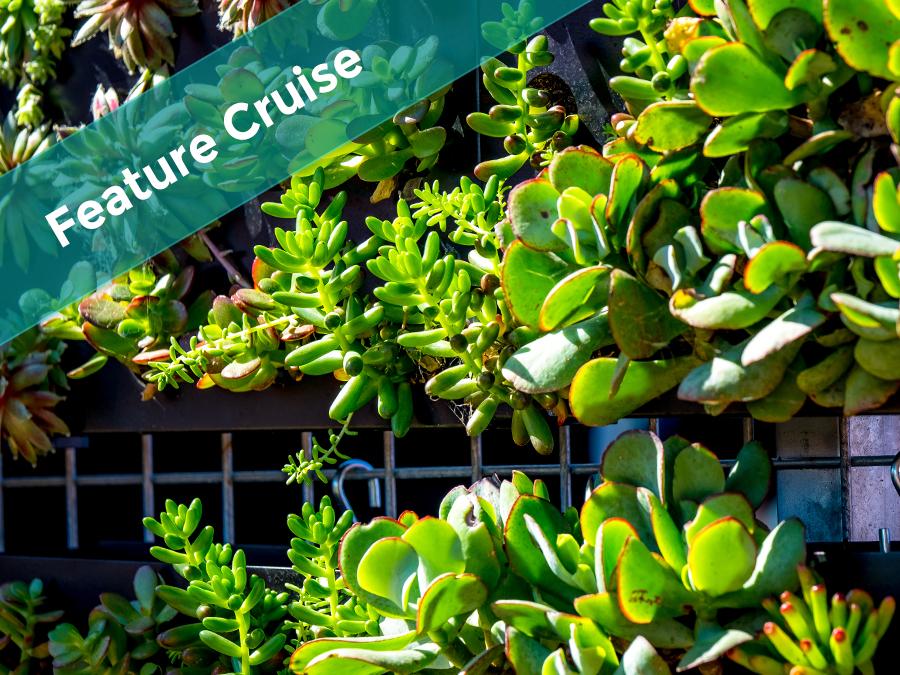 Peninsula Market Cruise