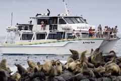 Seal Watching Cruise